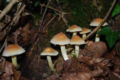 Champignons dans le bois